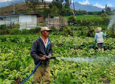 Fotografía de trabajadores regando campo de lechugas